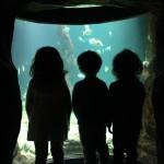 museo marítimo 1º I (7)