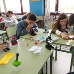 práctica microscocpio 6ºP (1)