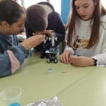 práctica microscocpio 6ºP (10)