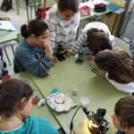 práctica microscocpio 6ºP (4)