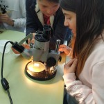 práctica microscocpio 6ºP (5)