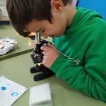 práctica microscocpio 6ºP (8)