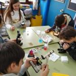 práctica microscocpio 6ºP (9)